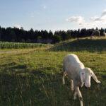 Auszeit-Bewegung-Premium-Homes-eU-Friederike-Hager